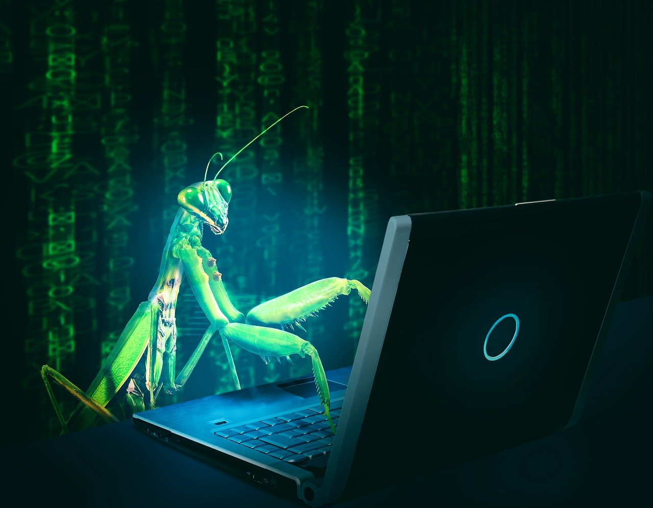 bug, virus, computer-4297771.jpg
